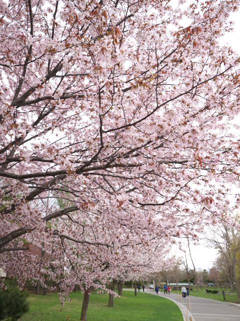 nakajima-park_06t.jpg