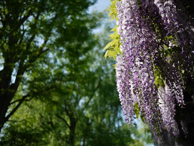 tukisamu-park_10t.jpg