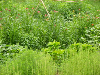 花の農園 050