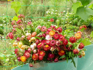 花の農園 057