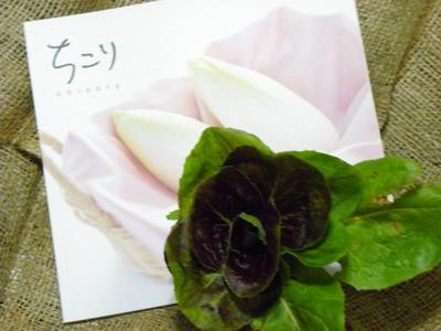花の農園 079