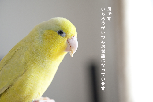 _DSC3760-4.jpg