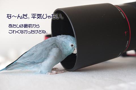 _DSC7600-2.jpg