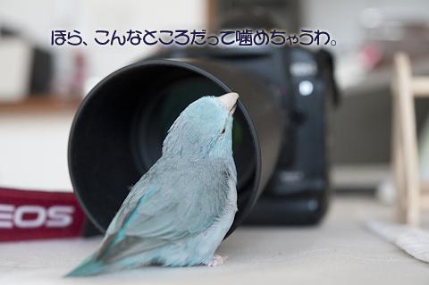 _DSC7601-2.jpg