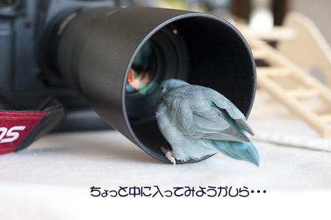 _DSC7606-2.jpg