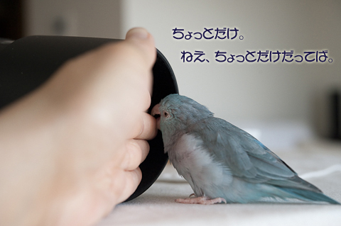 _DSC7614-2.jpg