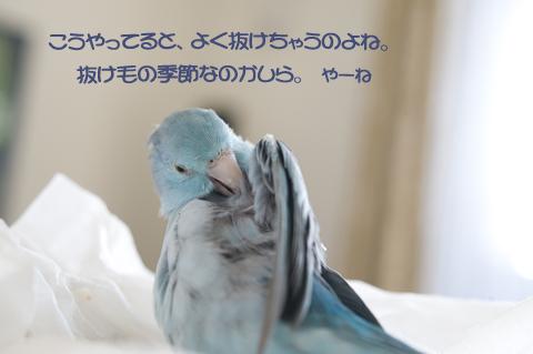 _DSC8392-2.jpg