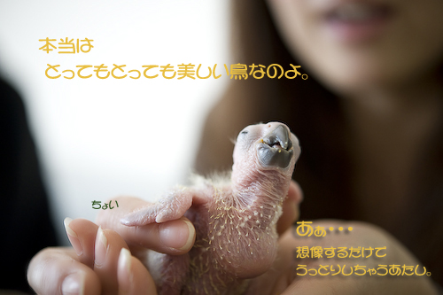 _DSC8733-2.jpg