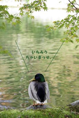 _S1W0193.jpg