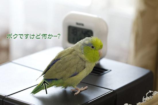 _S1W8225.jpg