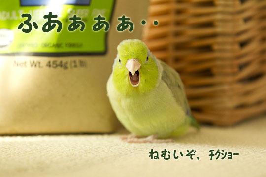 _S1W8413.jpg