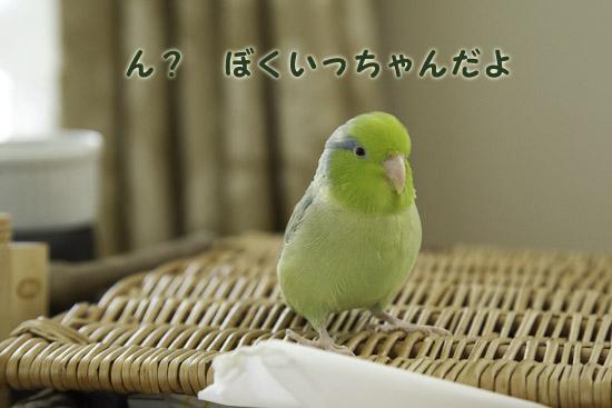 _S1W8757-2.jpg