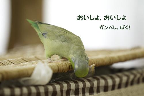 _S1W9308.jpg