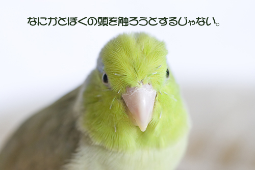 _S7W8376-2.jpg