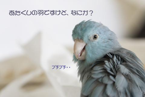 _S7W8472-3.jpg