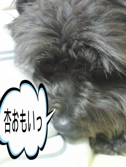 DSC_5135.jpg