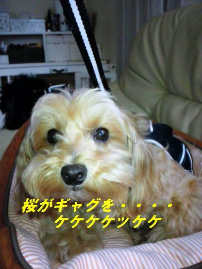 DSC_6108.jpg