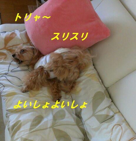IMG_2012071839935.jpg