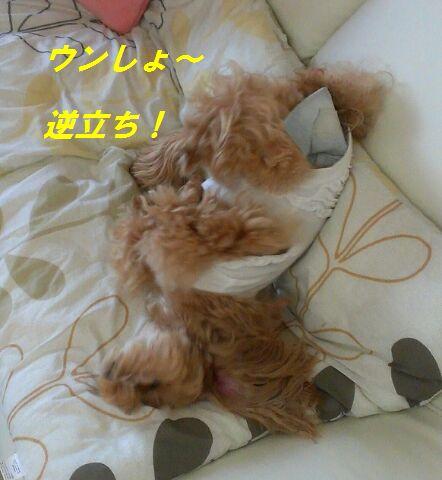IMG_2012071854661.jpg