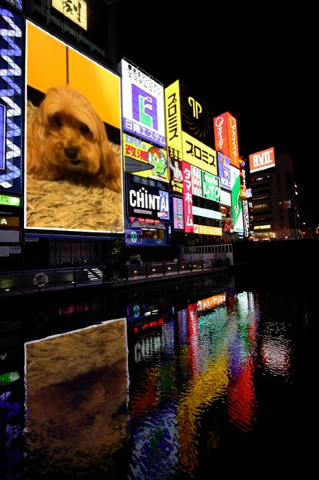 PF_Osaka_09072012194040446.jpg