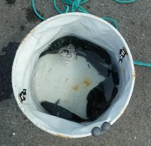 魚熱海釣り