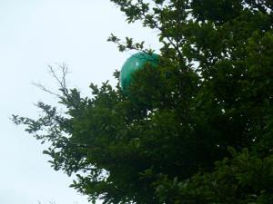 木の上に箱根スイカボールが