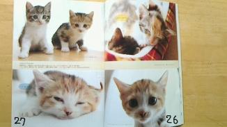 猫生活1月号