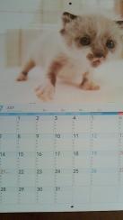 NEC_0231_20131124201155467.jpg