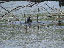 $都内で野鳥撮影