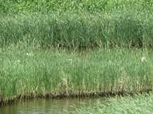 $都内で野鳥撮影-アオサギの群れ