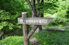 $都内で野鳥撮影-栃木県民の森