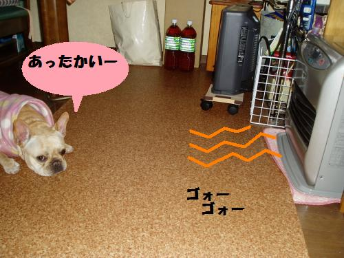 005_convert_20110214200746.jpg