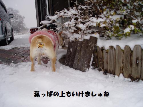 022_convert_20110212014446.jpg