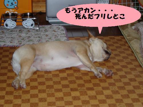 028_convert_20110208181831.jpg
