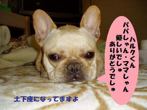 dc012425_convert_20110124142845.jpg