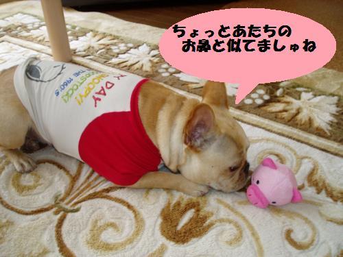dc013110_convert_20110131011437.jpg