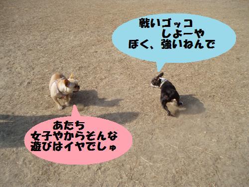 dc020504_convert_20110205001753.jpg