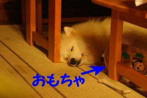 blog0851.jpg