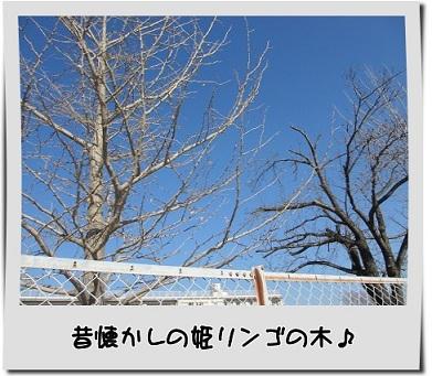 IMG_0012_201312062205027d2.jpg