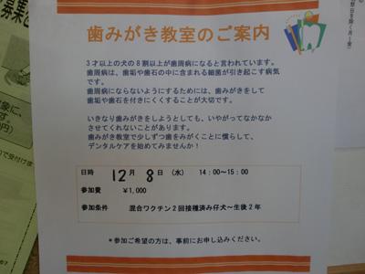 CIMG1162.jpg