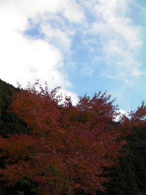 秋の京都9