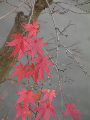 秋の京都10