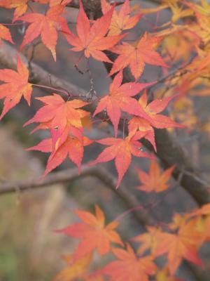 秋の京都11