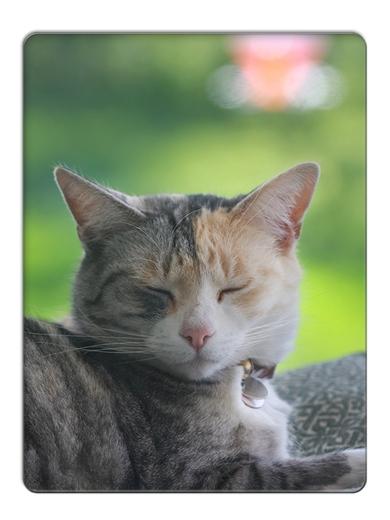 FC2_Sleepy Meeli
