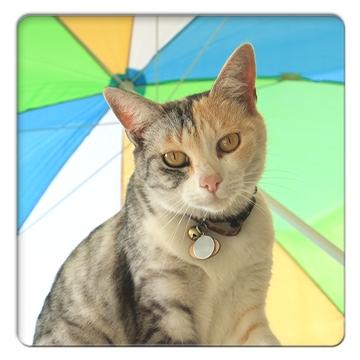 FC2_CatShow_11.jpg
