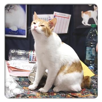FC2_CatShow_4.jpg