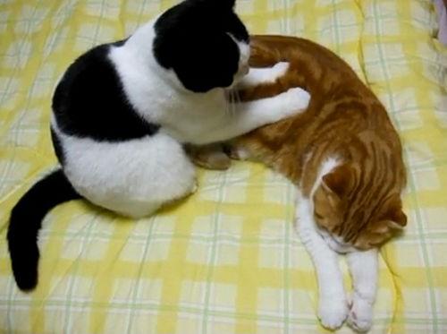 massage-neko2.jpg