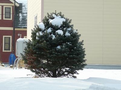 ミニクリスマスツリー!