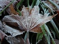 乾いた落ち葉も・・・真っ白