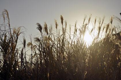 20121216_1682_1.jpg